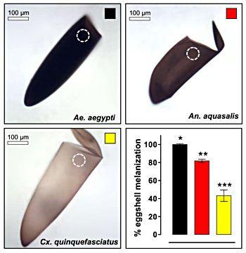 Comparação entre os níveis de melanina de diferentes mosquitos