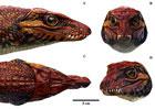 gondwanasuchusc