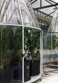 As plantas estudadas