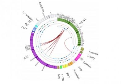 (ilustração: Molecular Biology Reports)