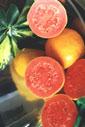 Genética e Melhoramento de Fruteiras Tropicais