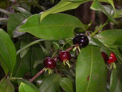(foto: Grumixameira/Wikimedia Commons)
