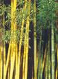 Palestra divulga potencial do bambu na arquitetura e construção
