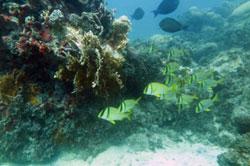 (foto: recife de coral no litoral da Bahia/Ruy Kikuchi)