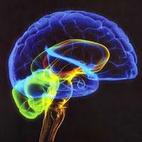 Mestrado em neurociências