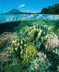 Instituto de Ciências Biológicas seleciona bolsista de Biologia ou Oceanografia